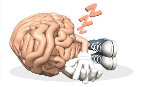 why brain need sleep